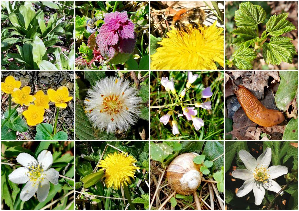 Flora am Dreifürstenstein