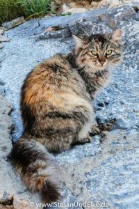 Katze in Rhodos-Stadt, Insel Rhodos, Griechenland