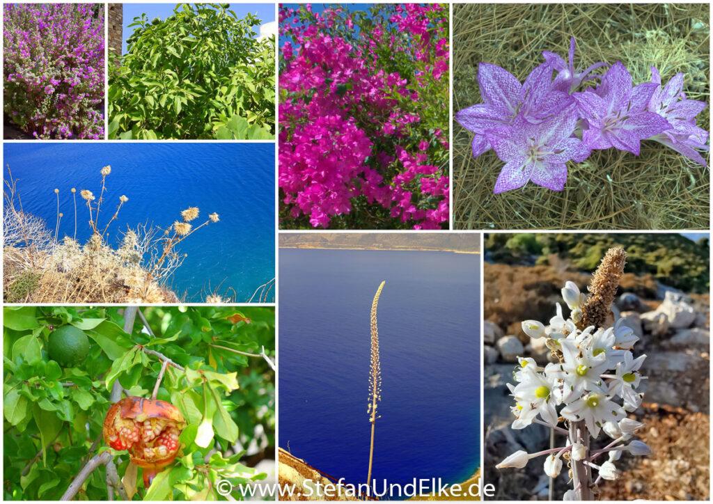 Bunte Pflanzelnwelt