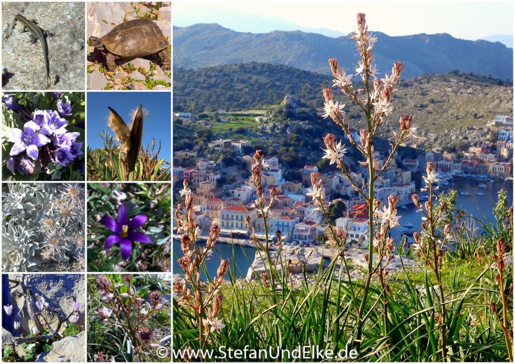 Flora und Fauna auf Symi, Griechenland